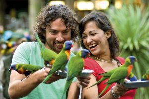Currumbin Wildlife Sanctuary - Accommodation Bookings
