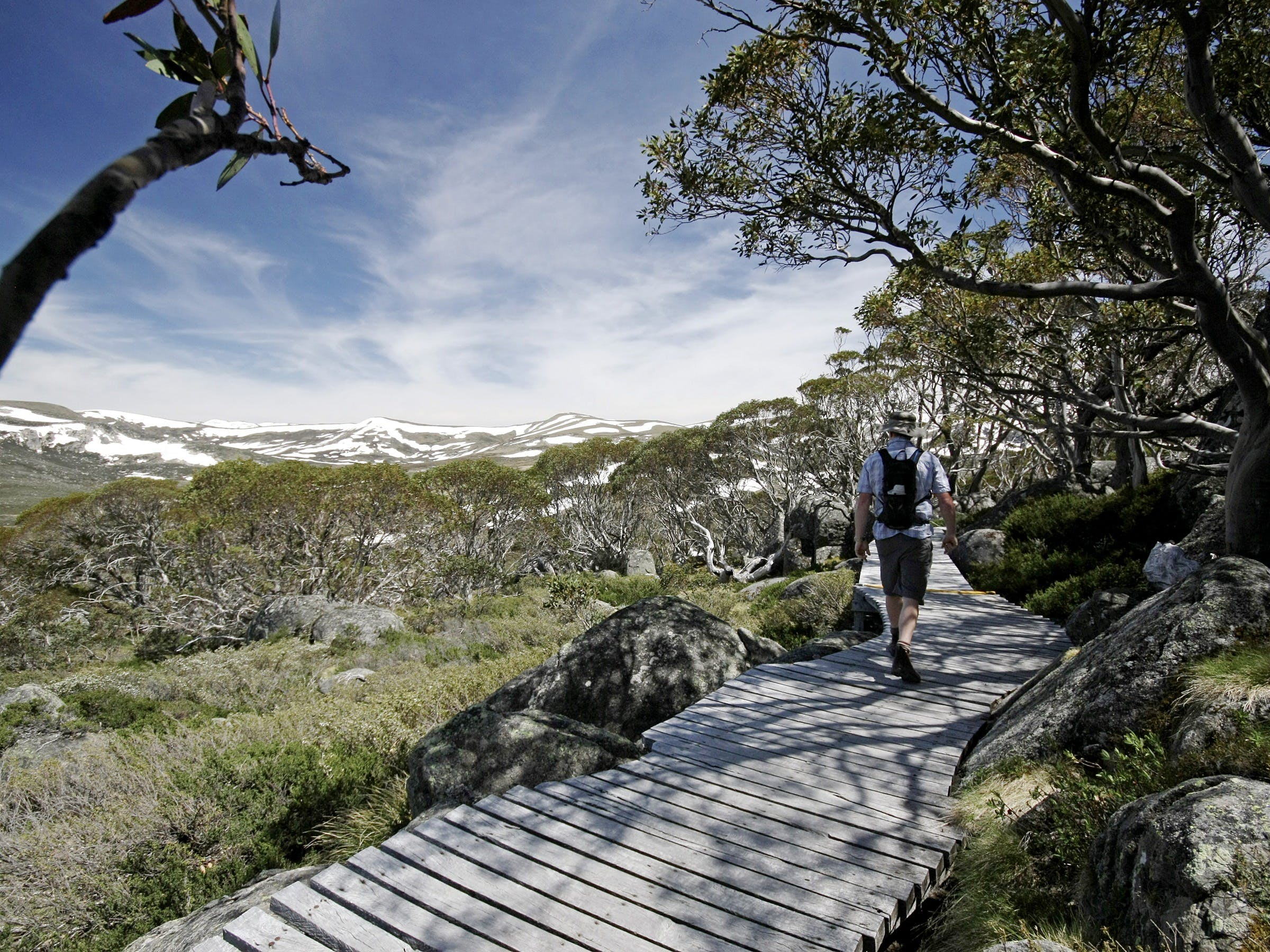 Snow Gums boardwalk - Accommodation Bookings