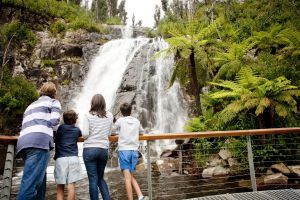 Steavenson Falls - Accommodation Bookings