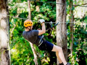 TreeTop Challenge Currumbin Wildlife Sanctuary - Accommodation Bookings