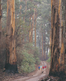 Beedelup National Park - Accommodation Bookings