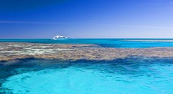 Reef Jet Cruises - Accommodation Bookings