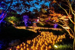 Canberra Nara Candle Festival - Accommodation Bookings