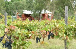 Fergies Hill Spa Cottage  Granite Ridge Wines - Accommodation Bookings
